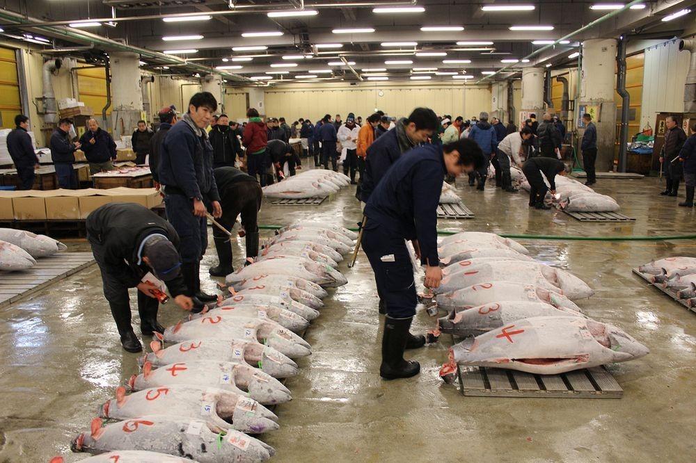tsukiji-fish-market-122