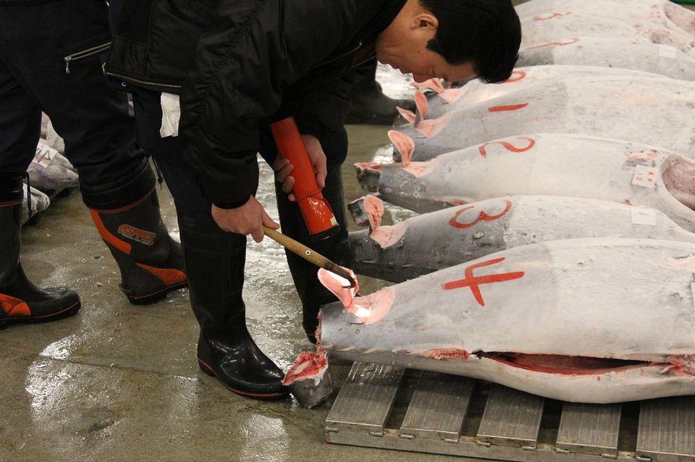 tsukiji-fish-market-142