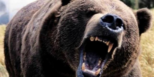Bemásztak szelfizni a medvéhez a fiatalok, az történt, amire gondolsz