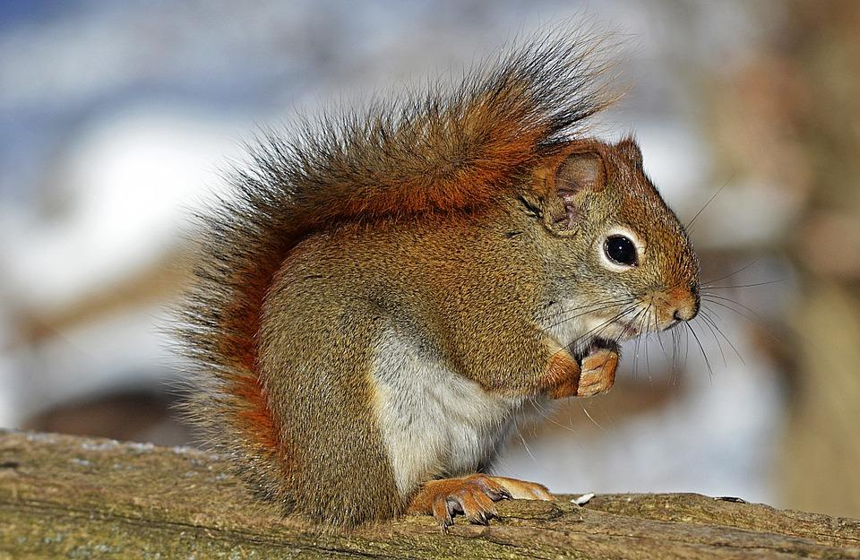 Ahogy ez a zalai mókus hálálkodik megmentőjének, arra nincsenek szavak – fotó