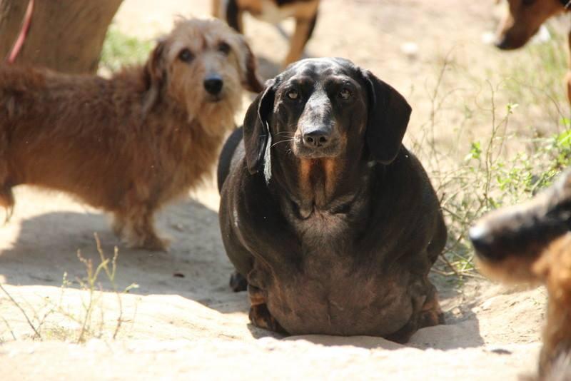 Fotó: Eszkuláp Állatvédő Egyesület