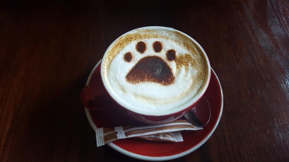 Egy Budapesten kávézó kiskutyát imád az internet – fotó