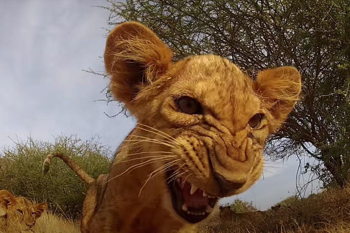 """Top 10 """"GoPro kamerák vs. állatok"""" találkozás – videó"""